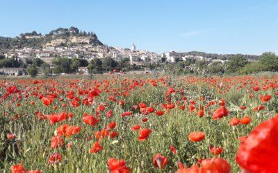 Le Mas Du Colombier, hôtel au calme en Provence, affronte le Covid_19