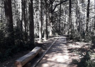 Balade dans la forêt des cèdres